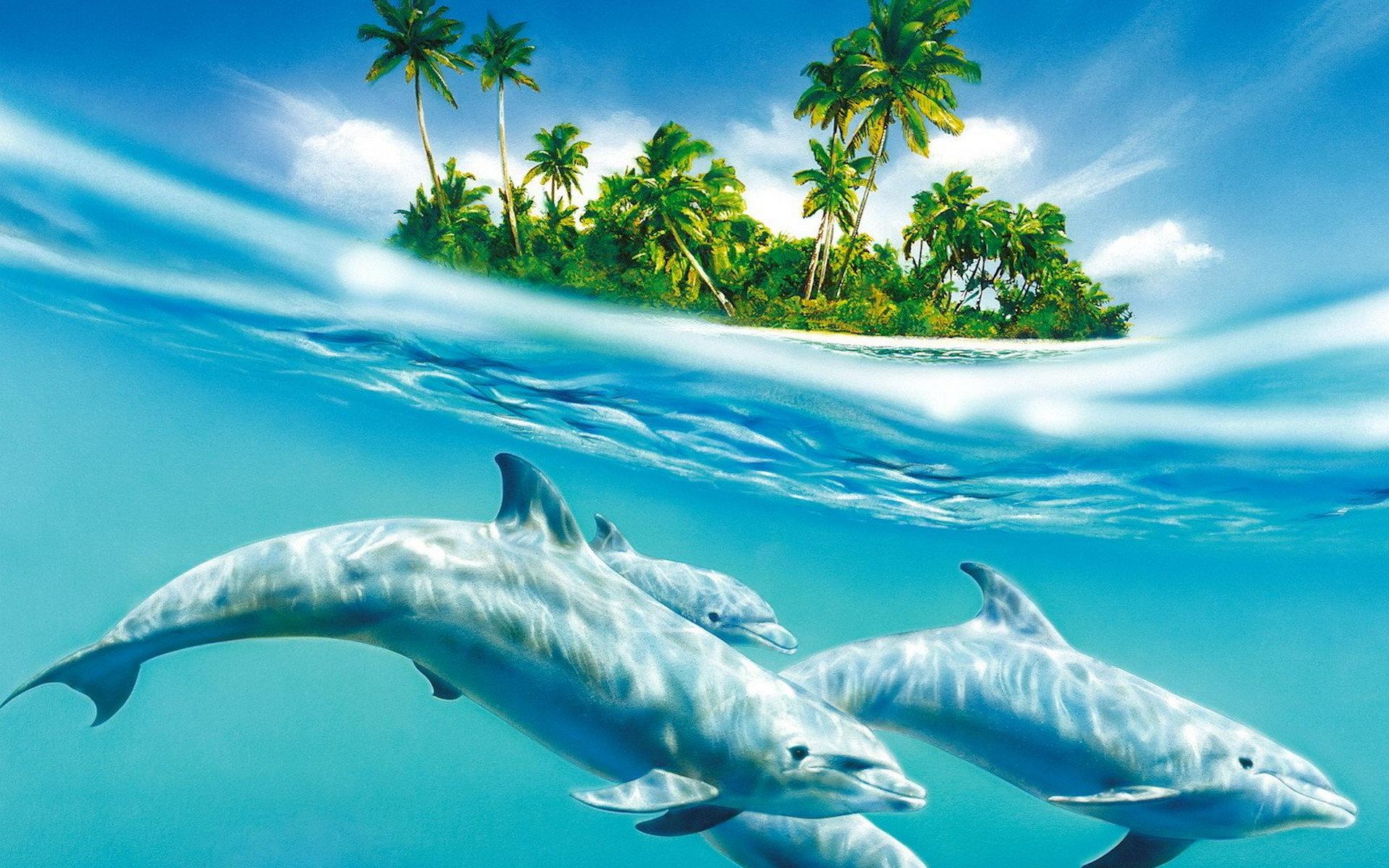 природа животные дельфины море скачать