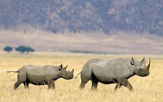 Photo free rhinoceroses, field, grass