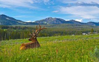 Бесплатные фото олень,рога,трава,горы,пейзаж,холмы,животные