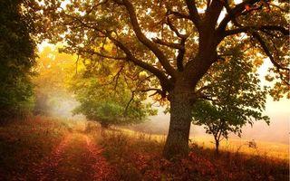 Бесплатные фото осень,тропа,тропинка,деревья,листопад,день,солнце