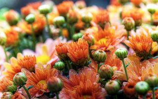 Заставки цветки,бутоны,лепестки,листья,стебли,ветки,клумба