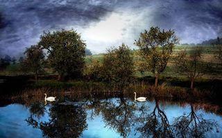 Фото бесплатно тучи, небо, облака, деревья, поле, деревня, лебеди, пруд, вода, птицы, пейзажи