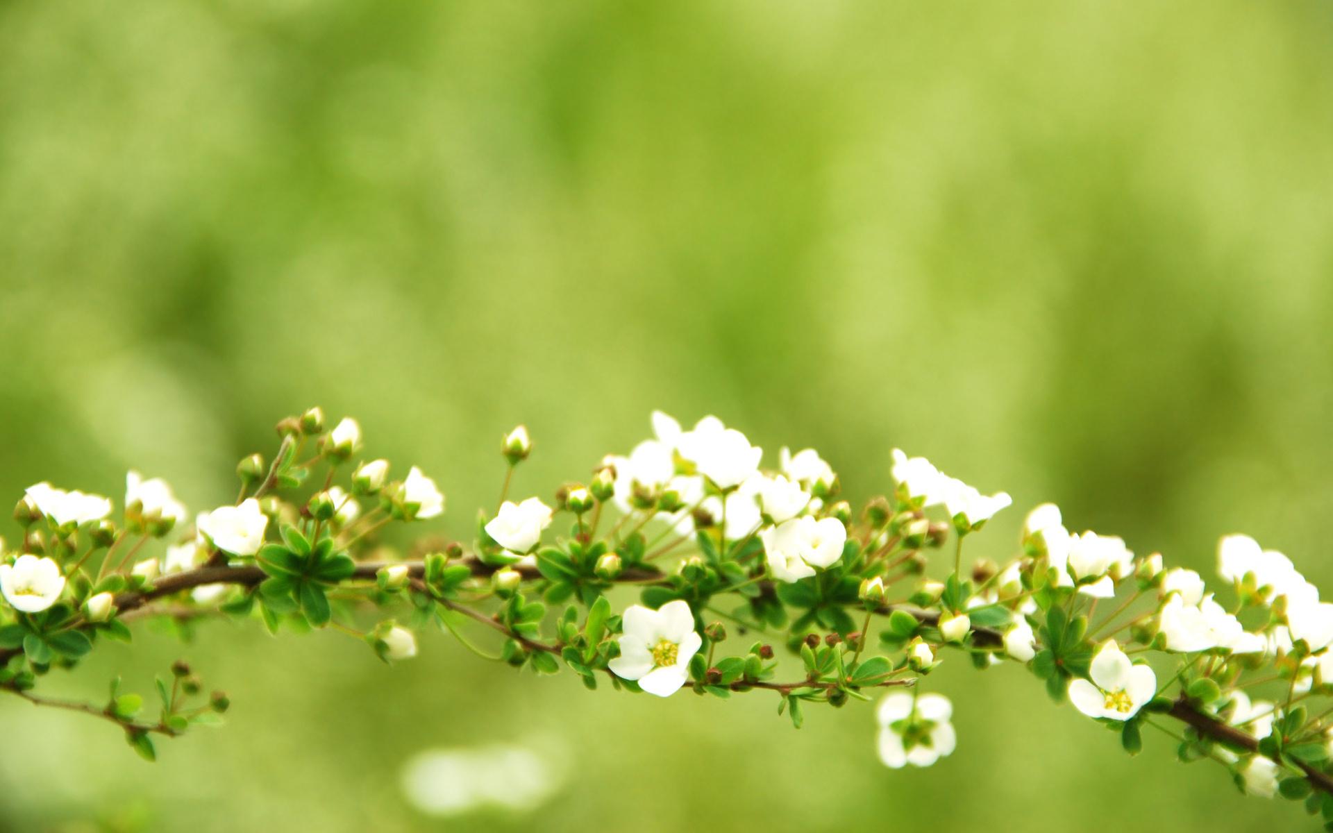 Обои на рабочий стол весна природа широкоформатные скачать бесплатно