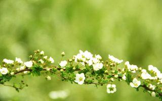 Бесплатные фото ветка,дерево,куст,цветки,лепестки,листья,почки