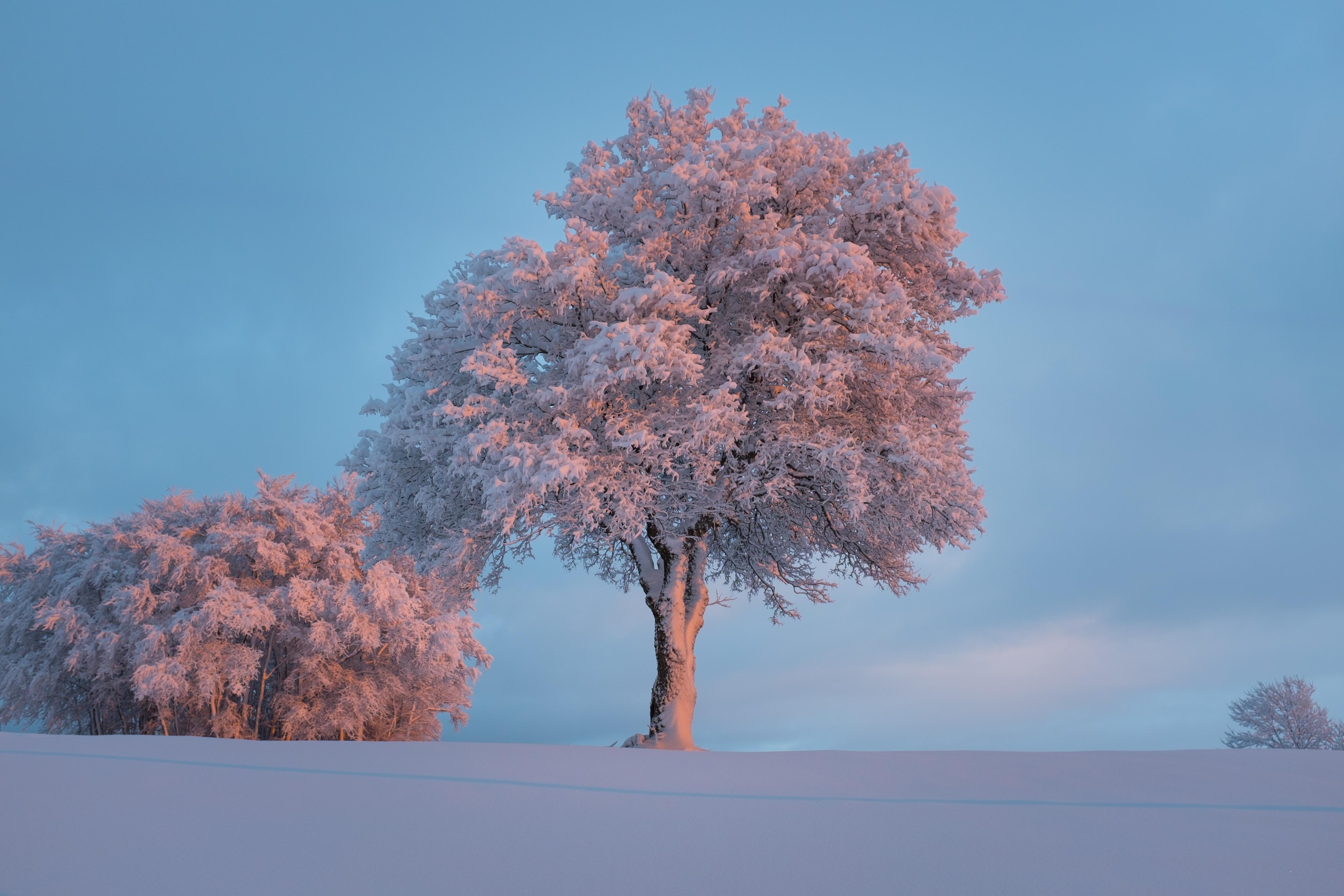 Обои зима, снег, сугробы, деревья