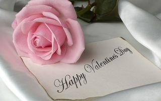 Фото бесплатно pink rose, valentines day, romantic