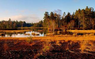 Фото бесплатно деревья, лес, трава, река, пруд, озеро, вода, болото, небо, облака, елки, пейзажи