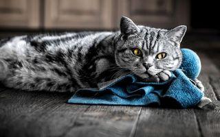 Бесплатные фото кот,морда,глаза,желтые,шерсть,пол,коврик