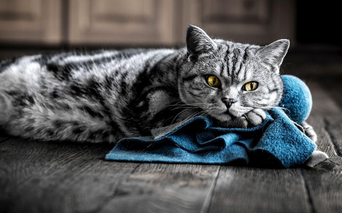 Фото бесплатно кошки, желтые, коврик - на рабочий стол