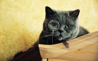 Заставки кот,шерсть,глаза,очки,мех,стул,животные