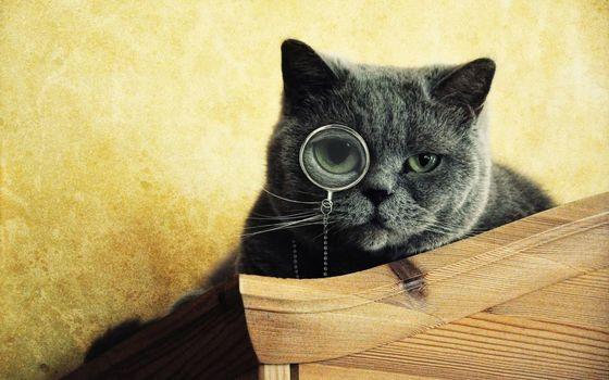 Бесплатные фото кот,шерсть,глаза,очки,мех,стул,животные,кошки