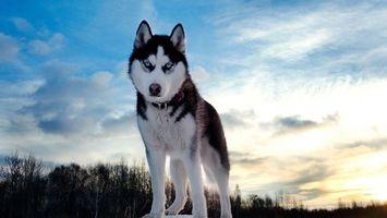 Бесплатные фото лайка,шерсть,небо,облака,снег,зима,деревья