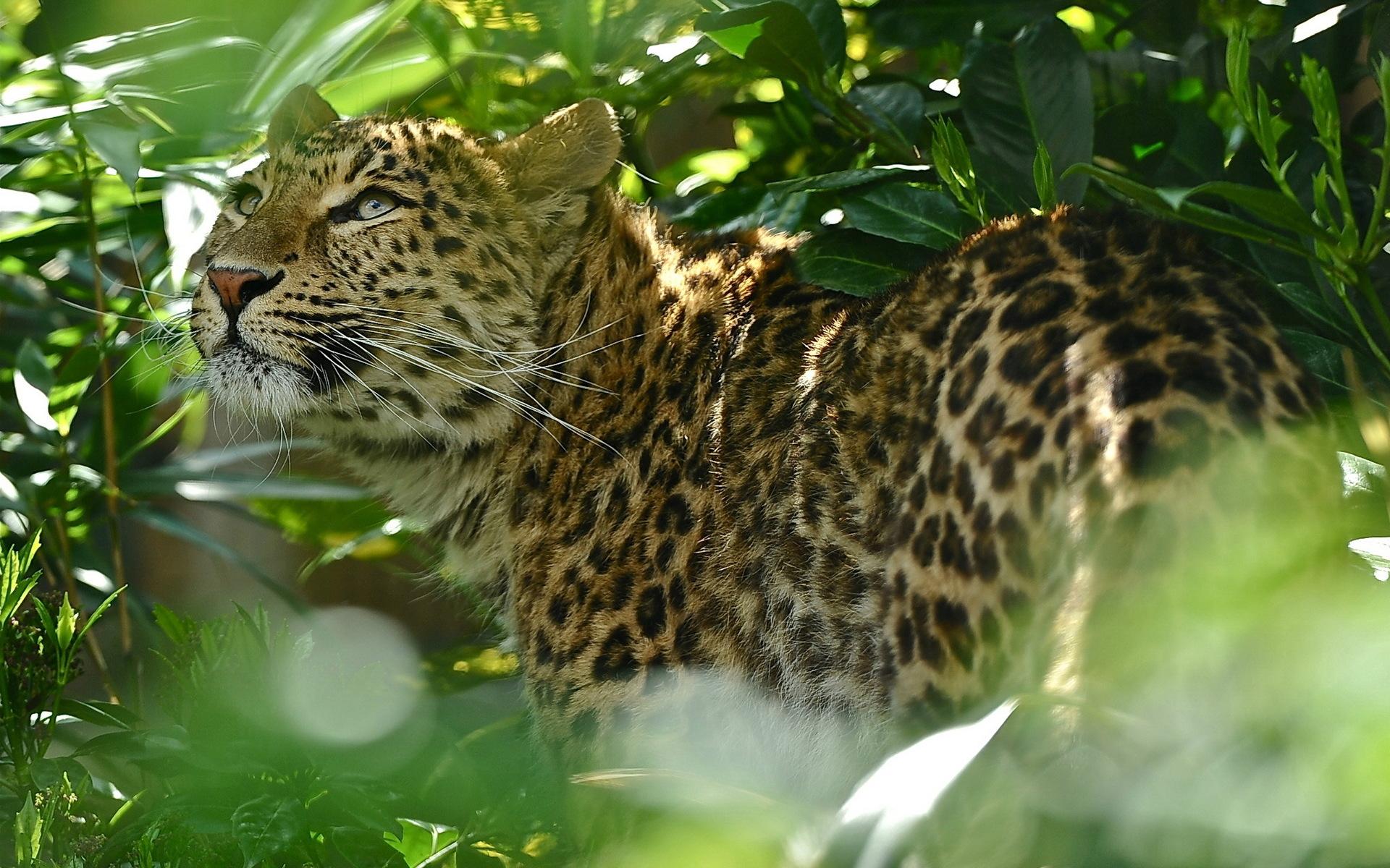 верю, фото лучшее фото леопарда керамика здесь