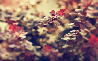 Заставки листики,цветы,фон,заставка,обои,растение,лето