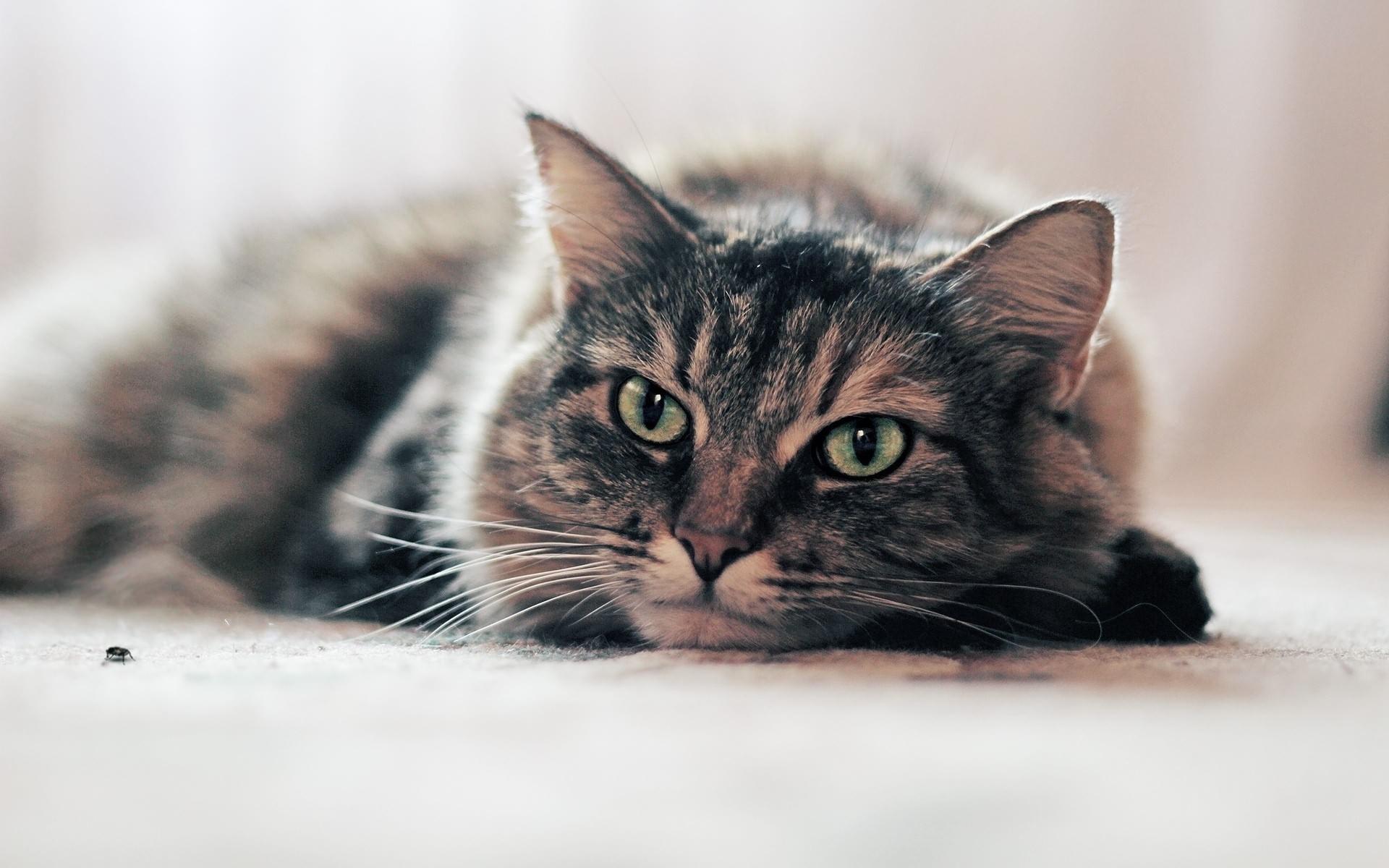 этом видеоуроке фото кошек на дисплей всей души желаем