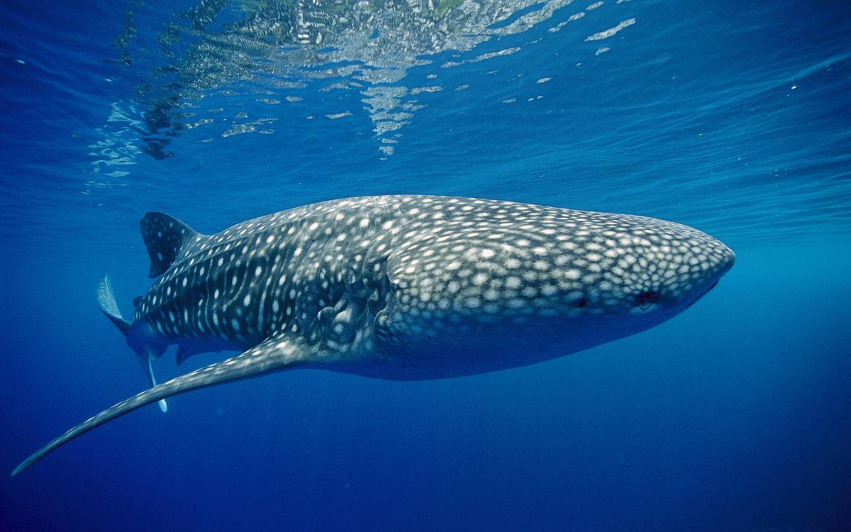Фото бесплатно море, океан, вода, рыба, пятна, млекопитающее, разное, разное