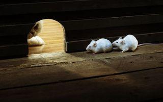 Бесплатные фото охота,кот,мышки,белые,нора,ожидание,кошки