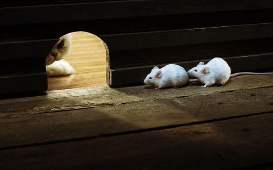 Фото бесплатно охота, кот, мышки