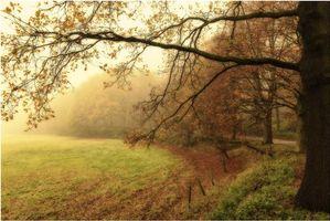 Фото бесплатно осень, парк, туман, поле, деревья, дорога, пейзаж