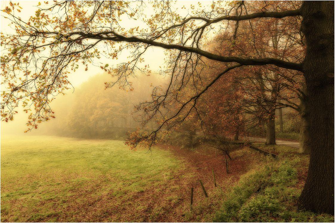 Фото бесплатно осень, парк, туман - на рабочий стол