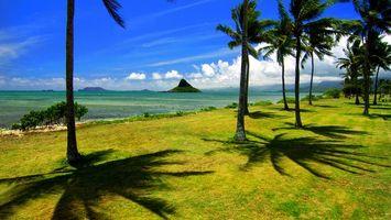 Бесплатные фото пальмы,море,вода,небо,облака,жара,лето