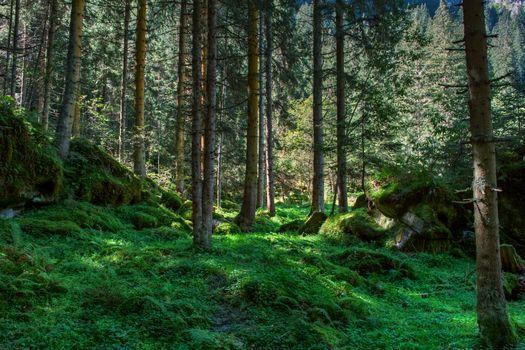 Фото бесплатно через лес, валуны, мох