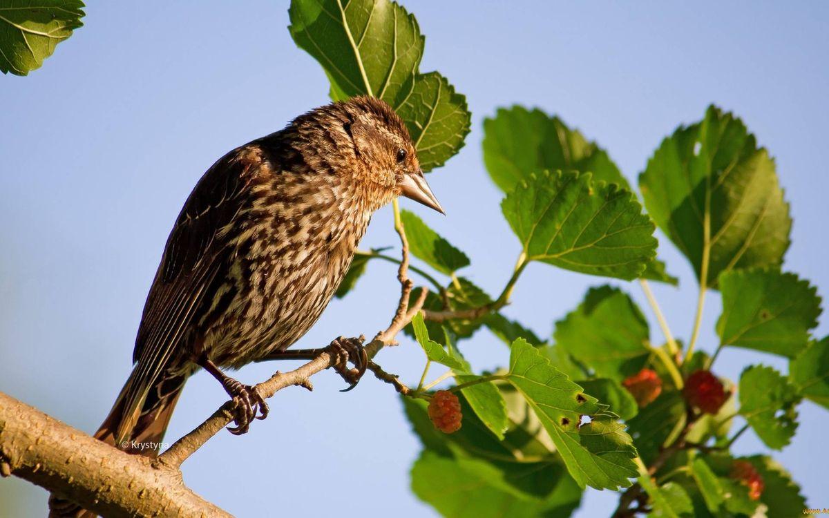 Free photo bird, beak, wings - to desktop
