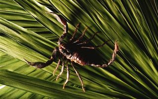 Photo free Scorpion, stinger, paws