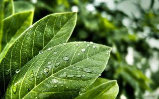 Бесплатные фото трава,растение,листок,жилки,роса,тропики,лес