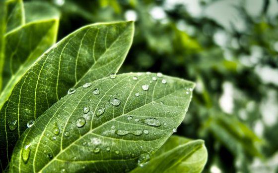 Фото бесплатно трава, растение, листок