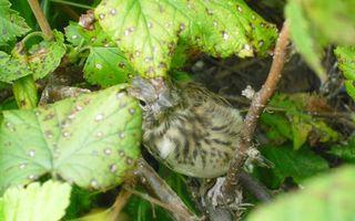 Бесплатные фото ветки,листья,птица,клюв,перья,лапы,крылья