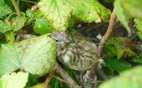 Фото бесплатно ветки, листья, птица
