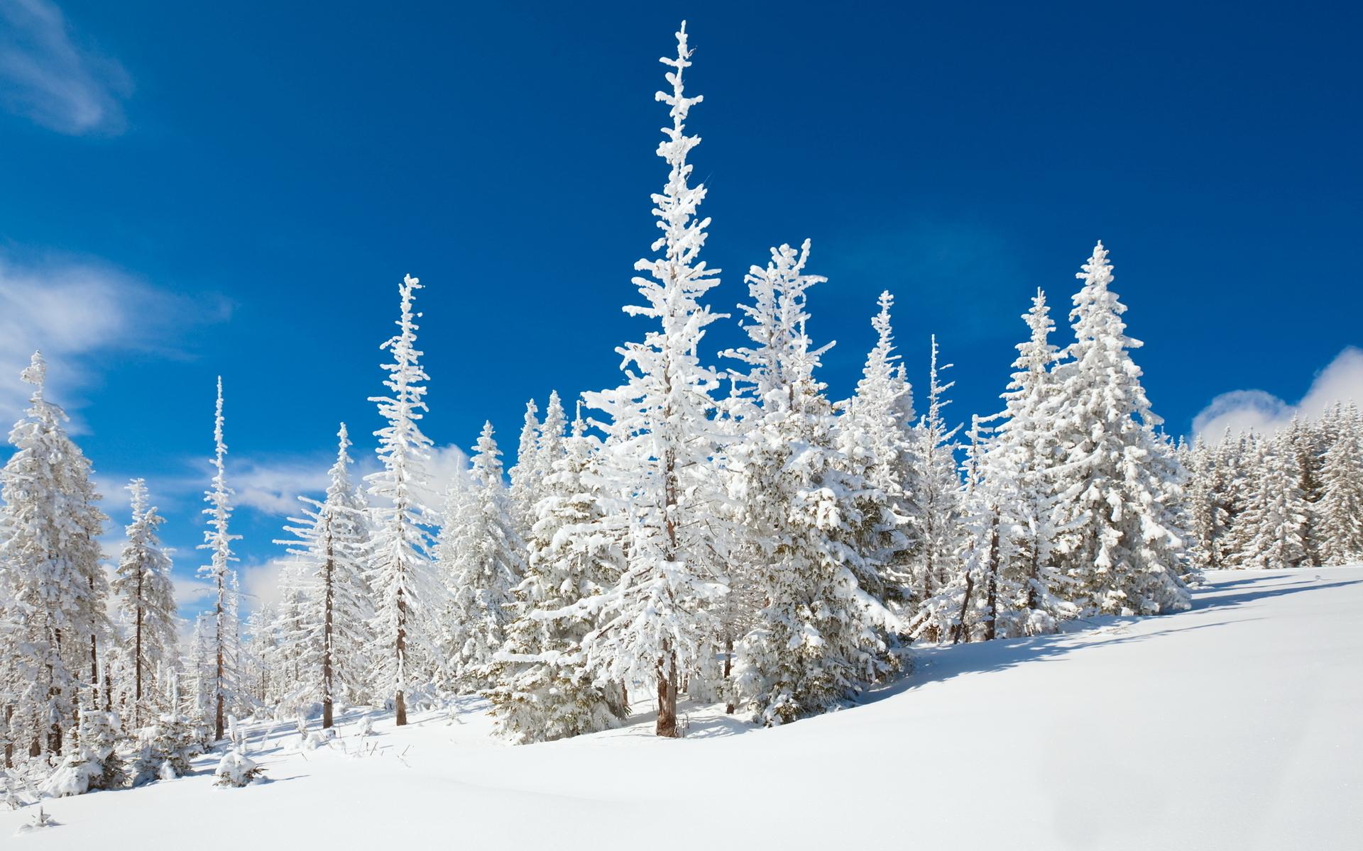 природа деревья ели зима снег небо  № 2803157  скачать