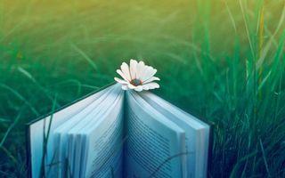 Бесплатные фото природа,настроение,трава,книга,цветок