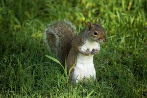 Photo free squirrel, rodent, animal