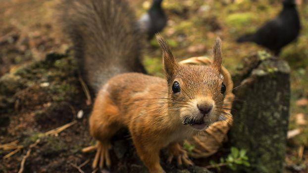 Photo free squirrel, mustache, tail