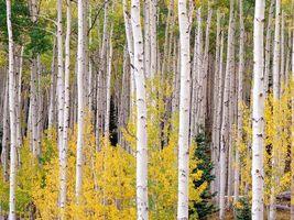 Фото бесплатно деревья, листья, стволы