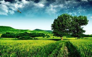 Бесплатные фото деревья,трава,небо,облака,самолет,горы,равнина