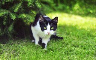Фото бесплатно елка, животное, охота