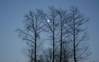 Фото бесплатно деревья, кора, небо