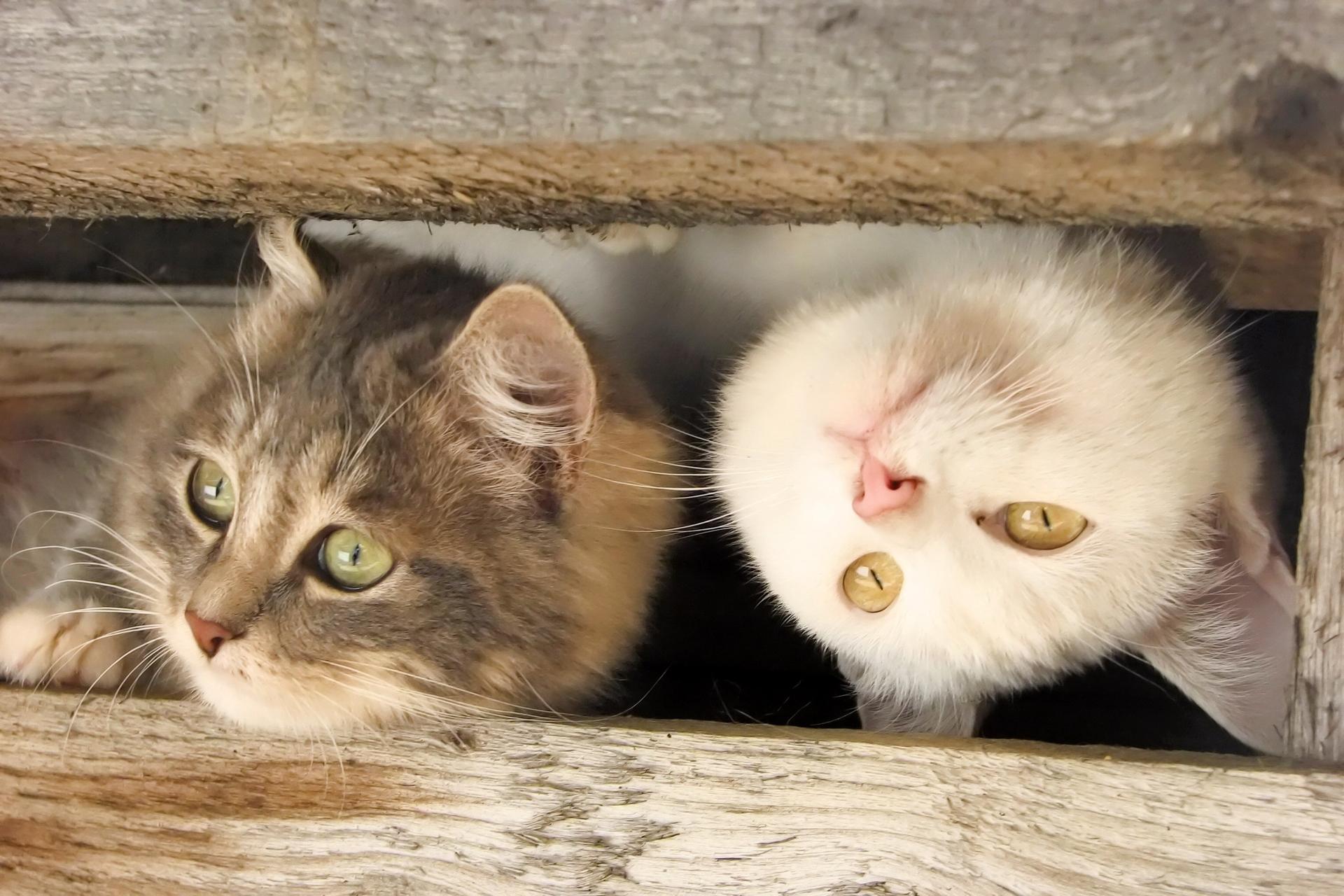 обои для рабочего стола забавных кошек № 606108  скачать