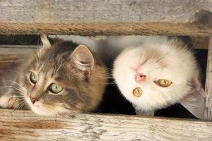 Бесплатные фото два котенка,взгляд,кошки,ситуации