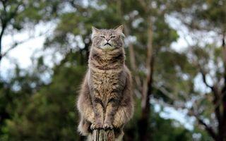Фото бесплатно гордый, кот, забор