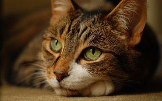 Заставки кот, красивый, глаза