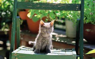 Фото бесплатно котенок, кот, серый, маленький, пушистый, глаза, уши, усы, лапы, лавка, скамейка, кошки