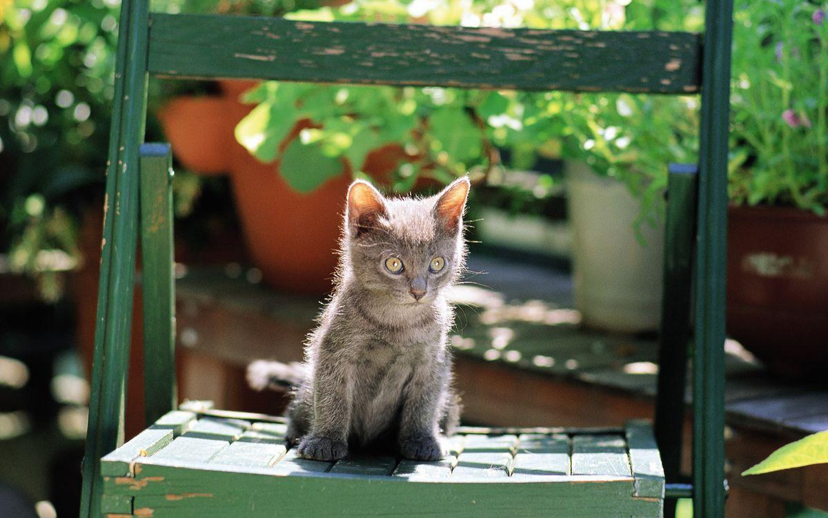 Фото бесплатно котенок, кот, серый - на рабочий стол