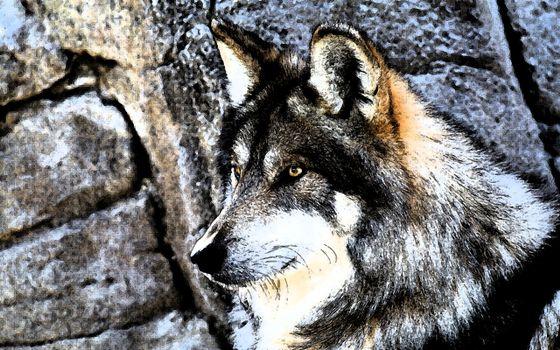 Фото бесплатно кристаллизованный волк, wolf, тёмный фон