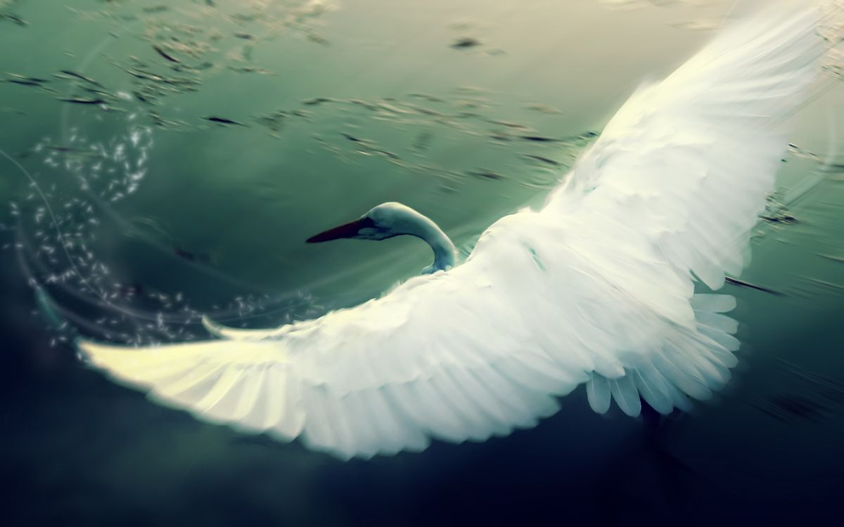 Photos for free swan, wings, swing - to the desktop
