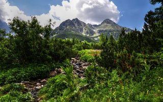 Бесплатные фото лес,камни,ручей,горы,деревья,трава,зелень