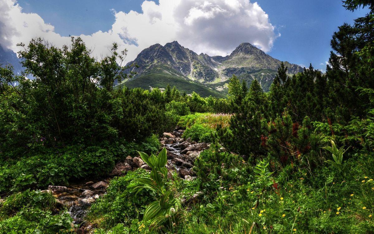 Фото бесплатно лес, камни, ручей, горы, деревья, трава, зелень, небо, облака, листва, природа, природа - скачать на рабочий стол